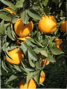 i_orange
